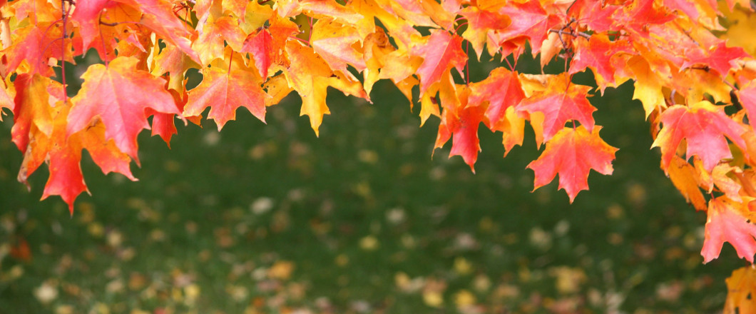 Are Leaves Littering Your Lawn?